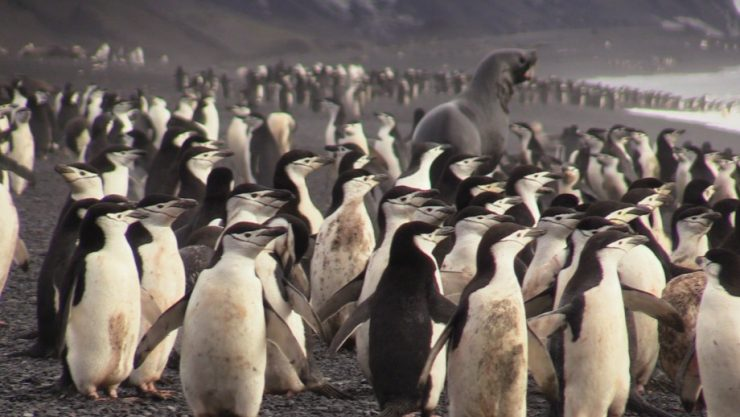 The only crowds you'll find with Epic's Antarctica