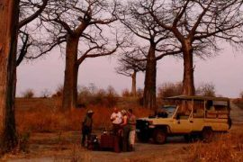 Fantastic New Camp in Tanzania