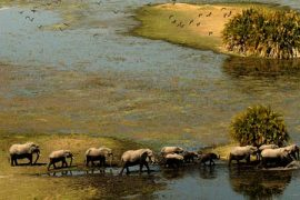 Botswana Odyssey – 2 tents available – 16-24 Sept 2012
