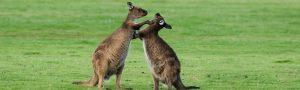 Kangaroo Island Dreaming