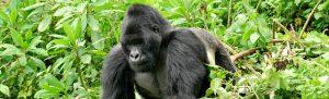 An Epic Ugandan Safari