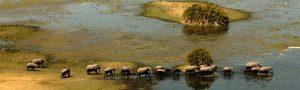 A Busy Week in The Botswana Bush
