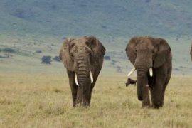 A Multi-Generational Family Safari