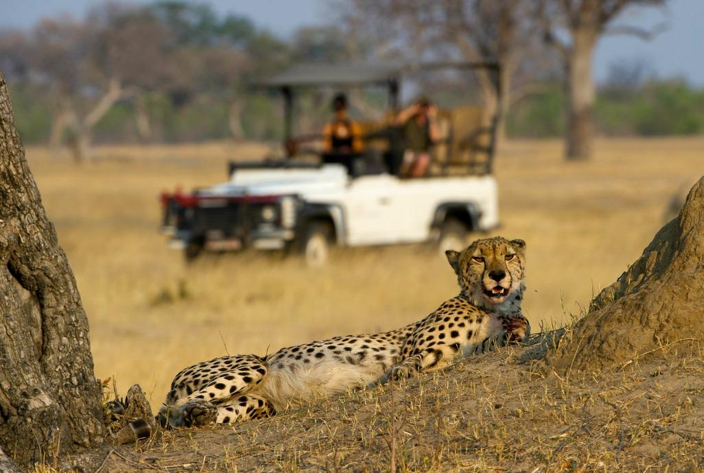 EPIC AFRICA: Zimbabwe Safari Highlights