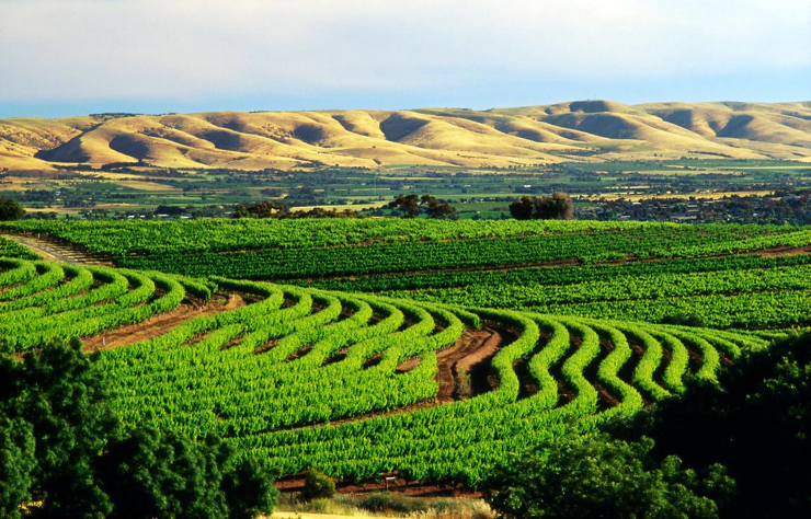 Barossa Valley wine region, South Australia