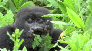EPIC AFRICA: Rwanda Safari Highlights