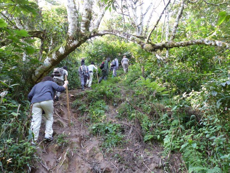 Mahale Chimp trekking, Tanzania