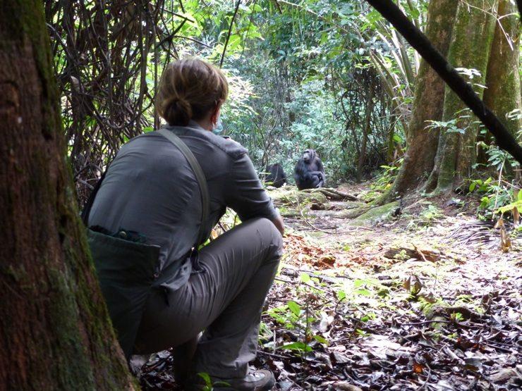 Trekking Mahale chimps, the ultimate African safari adventure