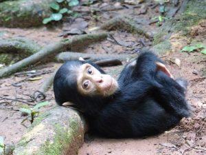 Mahale Chimp Trekking – Mahale National Park, Tanzania