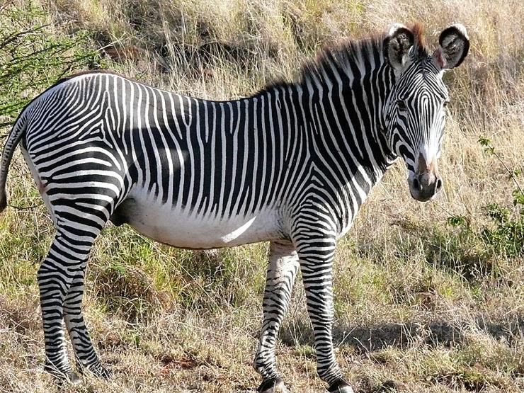 Epic Africa: Kenya & Tanzania Safari
