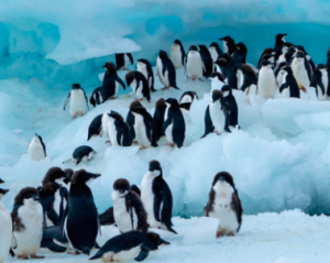 An Epic Journey into Antarctica