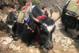 Epic Everest – Update 4 Acclimatisation in Namche