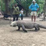 Komodo dragon - Komodo Island, epic Indonesia