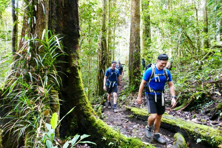 Cloud forest Kokoda Track Epic PNG 2019