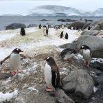 Penguins of Antarctica - Epic wildlife 2019