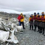 Whale bones - Antarctica 2019
