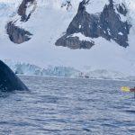 Epic Antarctica 2019