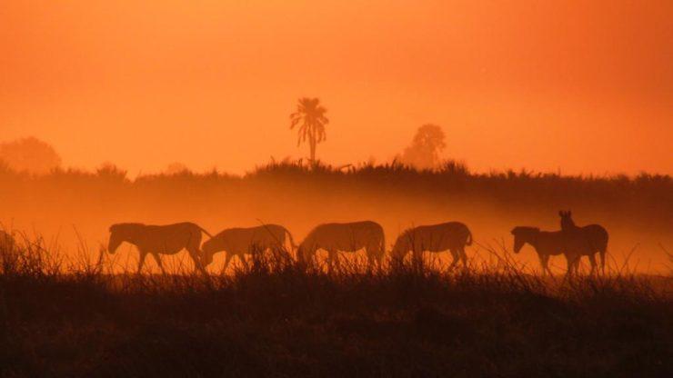 Zebra sunset -EpicAfrica