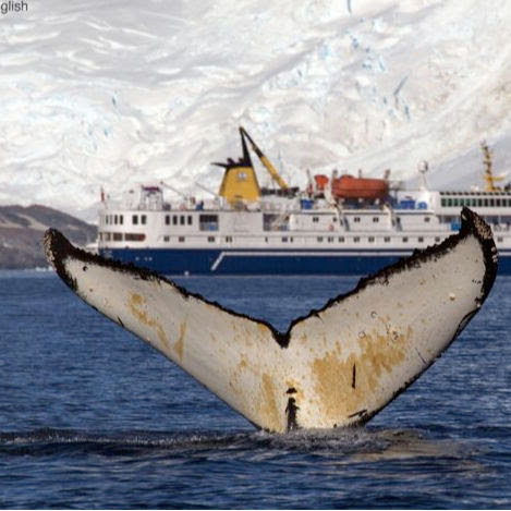 7 Nights Antarctica MV Ocean Nova
