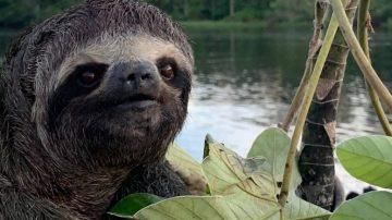 THE AMAZON & 'DEEPEST, DARKEST PERU'