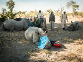 Wilderness Safaris, Botswana